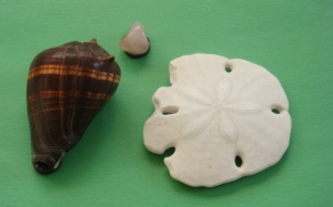shell-magnets